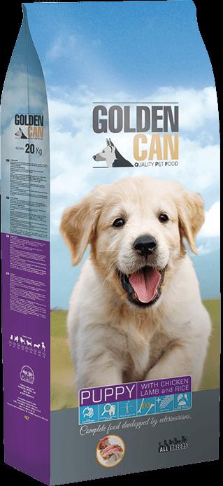 Golden Can Puppy